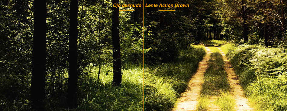 Lente Action Brown